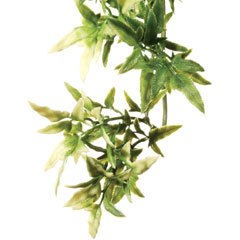 Exo Terra Jungle Plant - Croton Medium