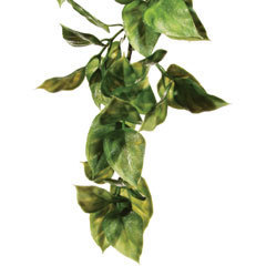 Exo Terra Jungle Plant - Amapallo medium